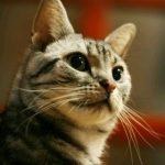BlogCatのプロフィール写真