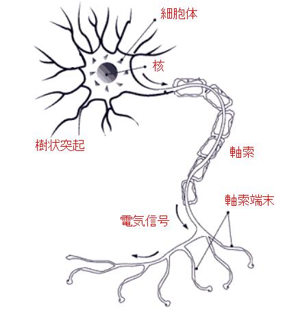 Python ニューロン模式図(イラスト)