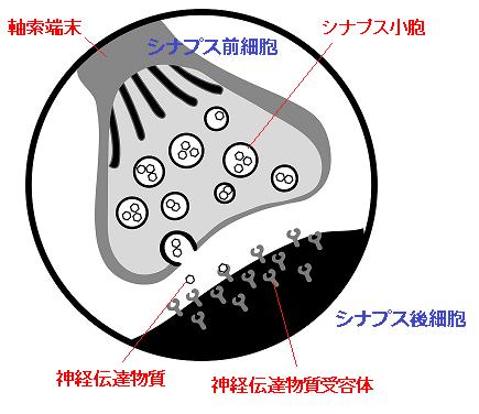 生物の神経細胞ネットワーク