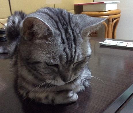 猫が怒ってます