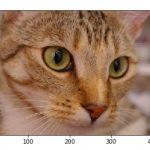 [Matplotlib] 画像の読み込みと保存